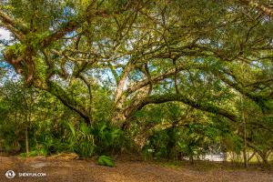 Peut-être se cachent-ils derrière cet arbre… ou peut-être pas... (Photo par le danseur Kenji Kobayashi)