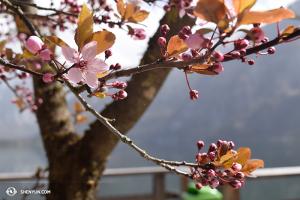 Wiosna w Austrii. (fot. tancerka Diana Teng)