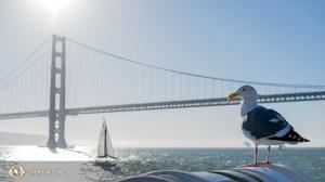 샌프란시스코 해변에서 만난 갈매기. (Photo by dancer Kenji Kobayashi)