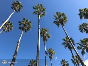 Stamtąd zespół udał się na wybrzeże do Santa Barbary. (fot. konferansjerka Nancy Zhang)