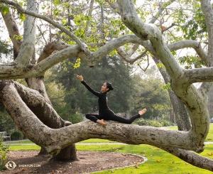 Wtapiając się w naturalne krzywizny drzew rosnących nieopodal teatru w Claremont, tancerka Liz Lu korzysta z kilku chwil dla siebie zanim rozpocznie się jedno z pięciu zaplanowanych przedstawień. (Stephanie Guo)