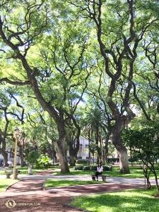 Tymczasem w Buenos Aires, śpiewaczka Shen Yun Touring Company, Rachael Bastick, napawa się otoczeniem drzew w parku przed  San Martín Palace. Zespół uświetnił scenę Teatro Ópera w Argentynie aż 10 występami. (kinooperatorka Jin Ye)