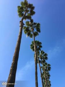 하늘까지 닿을 듯한 야자수. 다음 도시로 향하기 전 호텔에서 찍은 사진. 사진으로 보는 다음 여정을 많이 기대해 주세요. (Photo by Regina Dong)