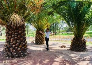 W Africam Safari Park w Puebla śpiewaczka Rachel Bastick stoi między drzewami, które wyglądają jak gigantyczne ananasy.