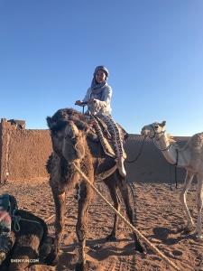 Тиффани позирует со своим новым другом, одногорбым верблюдом.