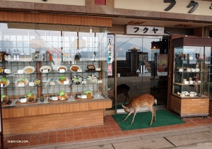 In eateries throughout Japan, plastic versions of the meals offered are often displayed in the shop windows. Oh deer, this potential customer seems quite tempted.