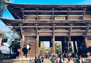 Ребята настроились посмотреть город Нара и сначала посетили Тодай-дзи или «Восточный великий храм». (Автор фото: танцор Стив Фэн)