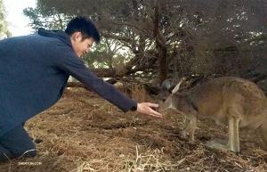 Artyści cieszą się ze spotkań z lokalnymi mieszkańcami gdziekolwiek się udadzą. Tancerz Teo Yi wita siez nowym przyjacielem na Wyspie Kangurów w Perth, Australia. (Oświetleniowiec Benny Chan)