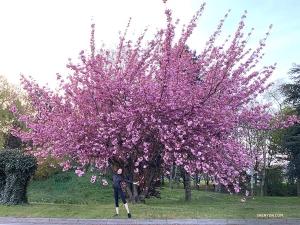 Teraz w drodze do Londynu tancerka Nara Cho pozuje przed obsypanym kwiatami drzewem. Do zobaczenia w Londynie! (główna tancerka Angelia Wang)