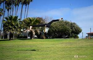 <p>Profitant de l'espace libre de Dana Point Harbour, la danseuse Elsie Shi effectue un «flip» sur l'herbe. (Photo d'Annie Li)</p><p>La danseuse principale Daoyong Zheng danse parmi les arbres imposants près du port. (Photo de la danseuse Kexin Li)</p>