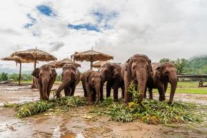 Odpoczywając od szumu miasta, Michelle Wu odwiedziła azyl dla słoni i poznała bliżej te szczęśliwe, zdrowe zwierzęta.