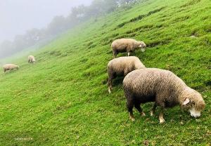 ...wystarczy zapytać owce! (Jeff Chuang)