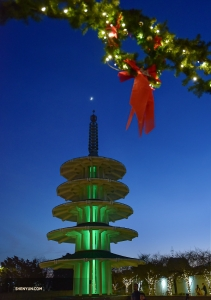After a New Year's Eve matinee performance, performers check out San Francisco's Japantown.  (Photo by Johnny Chao)