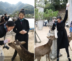 Along the way, they make some new friends. These free-roaming deer have no fear when it comes to tourists.