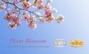 Shop Plum Blossom